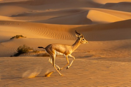 Emirates Group reafirma su compromiso con la Reserva del Desierto de Dubái y del Valle del Wolgan