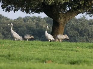 FIO (Feria Internacional Ornitología) Extremadura será 26 y 27 de Febrero