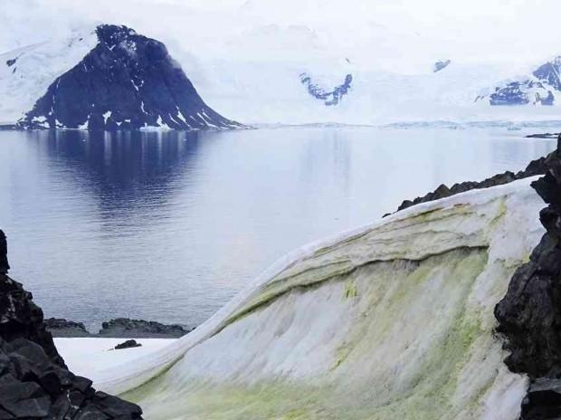 El cambio climático vuelve verde a la Antártida