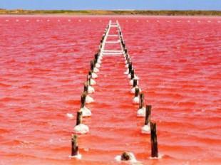 Regresó el mar rosado a Galerazamba, pero la playa estará cerrada